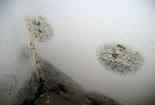 Condensation-black-spot-mould